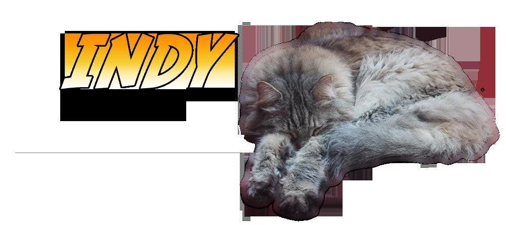 header_indy